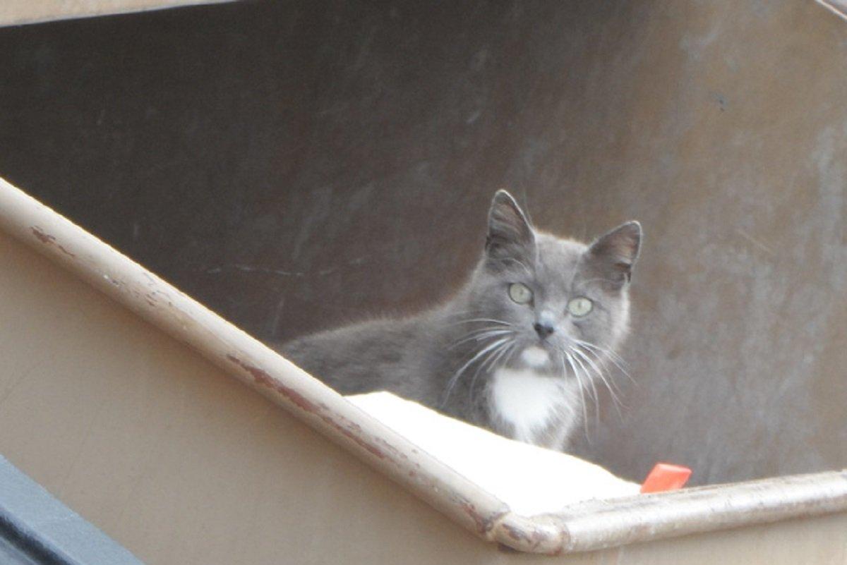 cat in trash