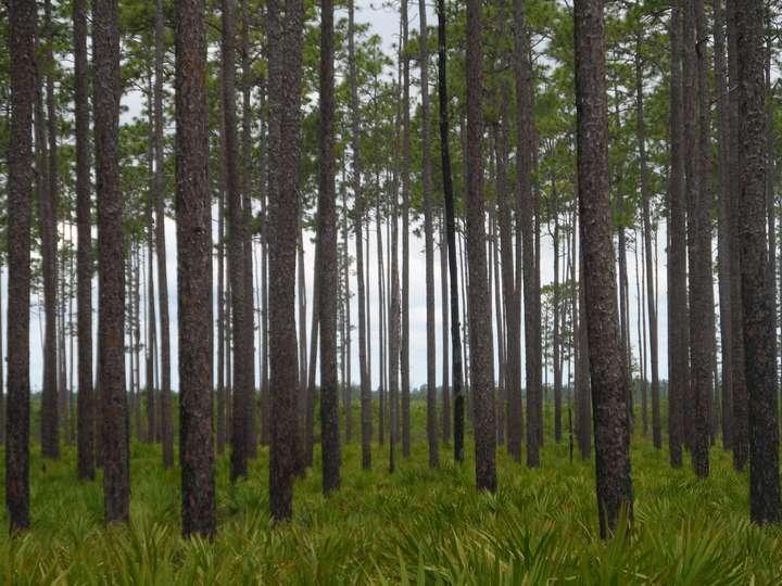swampy woods