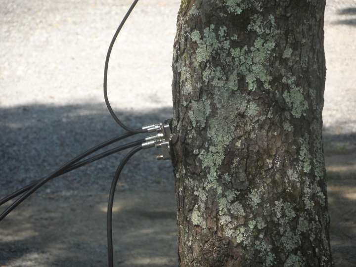 tree with wires