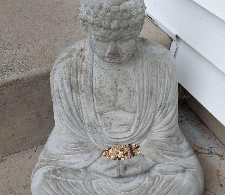 buddha with birdseed