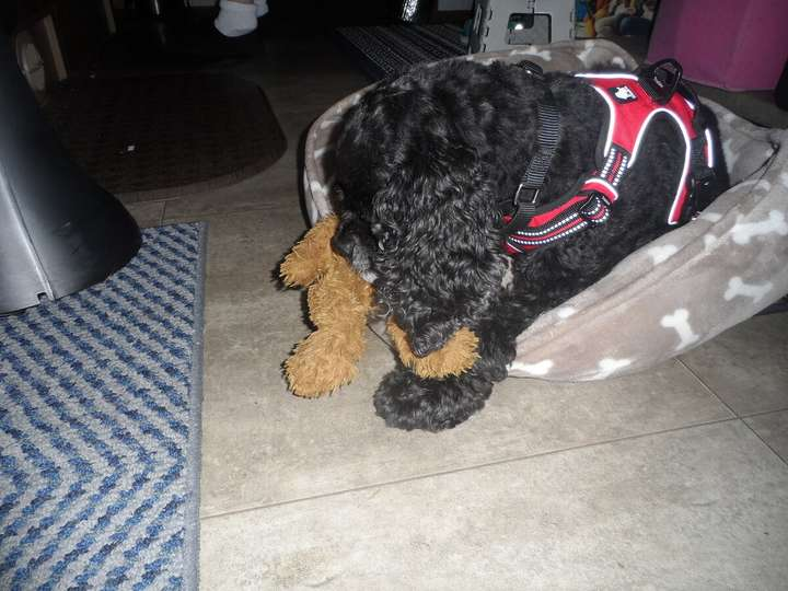 Spencer with a toy